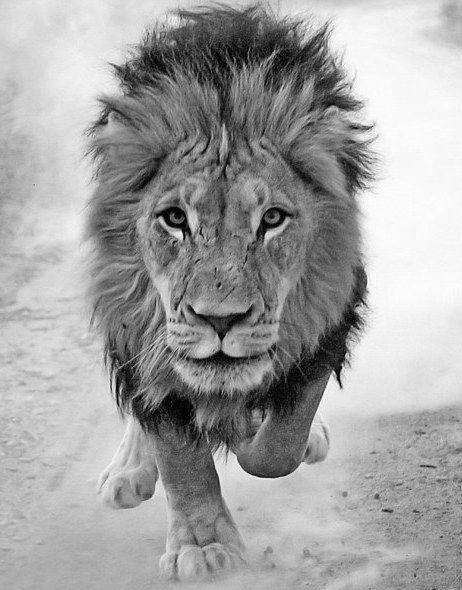 lionsroar