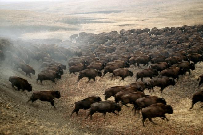 herd that.jpg